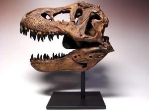 """ティラノサウルス""""スタン""""1/9スケール頭骨(クリックするとページにとびます。)"""