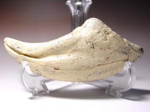 アジアのティラノサウルスこと、タルボサウルスレプリカ