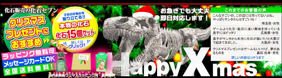 珍しいクリスマスプレゼントは化石セブン