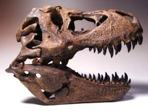 T-rexの1/9スケール頭骨レプリカ