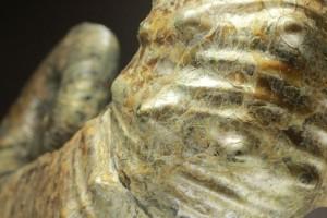アーティスティックなロシアのアンモナイト化石です。