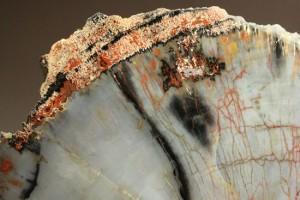 木化石 色とりどりの鉱物に置換されています