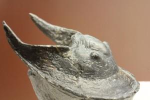 モロッコ産三葉虫ハルペス(Harpes perradiatus)