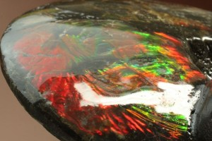 宝石に認定されているアンモライト(Ammolite)