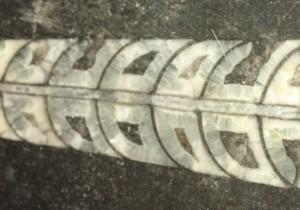 直角石(オルソセラス)のカルテット