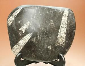 幾何学模様!インテリア化石として人気があります。