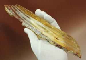 マダガスカル産、あなたの足よりデカいかも!?巨大な虫色コーパル