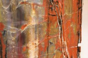 木の化石ケイカボク(珪化木)の断面