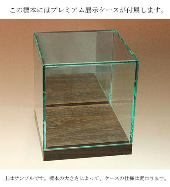 高級ガラスケース