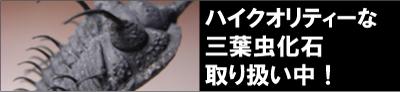 三葉虫 化石
