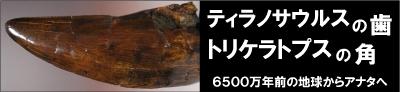 恐竜 ティラノサウルス 化石 販売