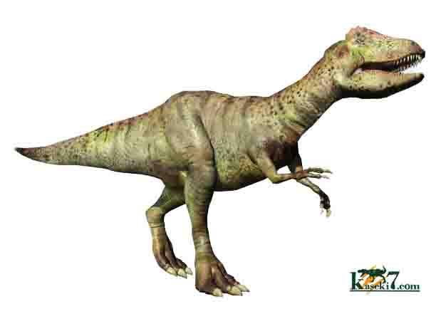 アロサウルス 画像 現在販売中のアロサウルスの標本はありません。売却済みのアロサウルスの標本..