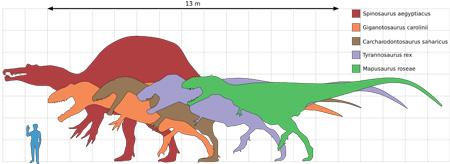 スピノサウルス 画像 比較