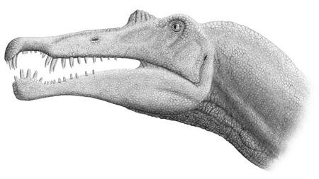 スピノサウルス 画像