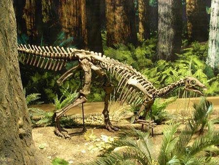 カンプトサウルス 化石セブンスマホ専用サイト