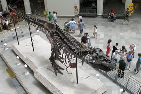 ティラノサウルス、全身骨格