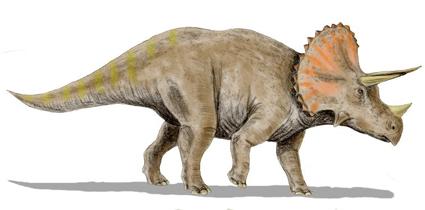 トリケラトプスの画像 p1_3