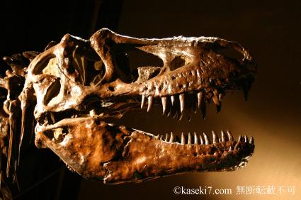 ティラノサウルス・レックス頭部骨格