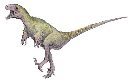 獣脚類の恐竜の化石、販売