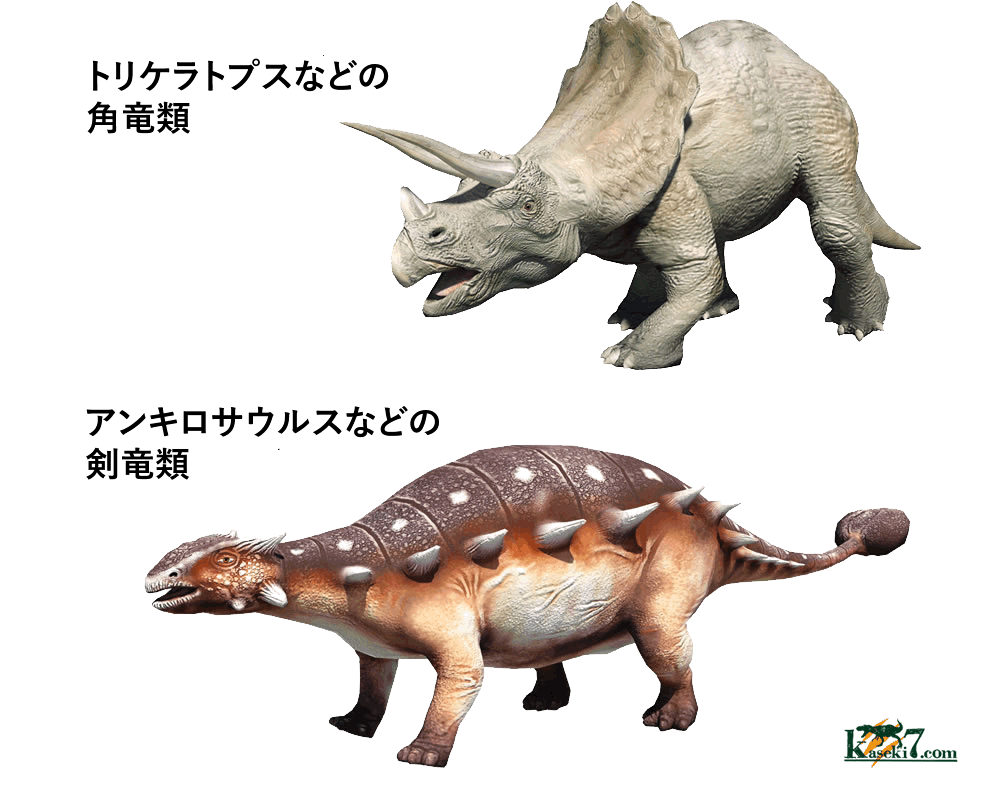 鳥盤類には、角竜と剣竜も含まれる。