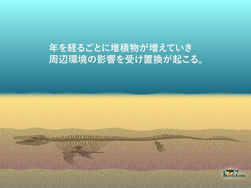 周辺環境の影響を受け、骨の成分の置換が起こる。