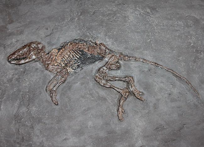 世界的な化石の産地、メッセルピットとは?
