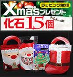 化石15点セット クリスマスプレゼントや年末年始プレゼントに最適 恐竜の歯から恐竜のウンチまで