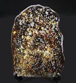 20センチ超え!地球史という極めて巨大なスケールで語られるべき、宇宙からの贈り物。20センチの特大隕石標本!ケニア・セリコ産の上質なパラサイト隕石(本体防錆処理済み)