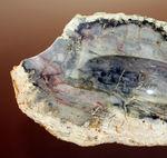 中央にくぼみあり。小物入れとしても使えるブラジル産珪化木(petrified wood)