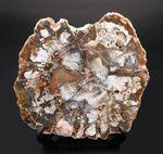 書斎のデスクやインテリアに最適!およそ2億5千万年前の針葉樹の幹の化石、珪化木(Petrified wood)