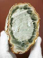マダガスカル産の色彩豊かな珪化木。もはやジェム。ベベルカットが施されている点にもご注目。