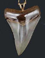 ナチュラル!凄まじいセレーションを有する、メガロドン(Carcharocles megalodon)の歯化石を使ったペンダントトップ(高級ジュエリーケース、革紐、チェーン付き)。金属接合部は14金です!