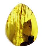 光をあてると白から黒に変化する箇所あり!バルト海産の琥珀(Amber)ドロップ型のカボション