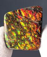 生物起源の宝石の一つ、カナダ・ロッキー山脈の東側斜面でのみ採集されるアンモライト(Ammolite)のピース。ドラゴンスキン模様。