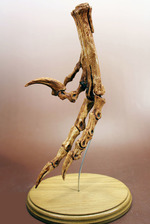 化石の精巧レプリカ