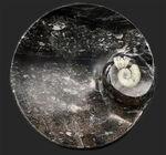 直径最大部16センチ超えの立派な大判皿!メインのゴニアタイト(Goniatite)を始めとした多数の生物が模様として配されています