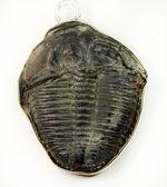 驚きの発想が具現化!5億年前の三葉虫を胸元に飾ろう。三葉虫ペンダント(スターリングシルバー製。2種類のチェーン。高級ジュエリーケース付)