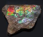 赤から青までフルカラーを呈する希少なアンモライト(Ammolite)のピース。1キロを超える立派な品