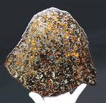 半透明の黄色の輝きにに目を奪われる!最大部23センチ超えの極大のパラサイト隕石(本体防錆処理済み)