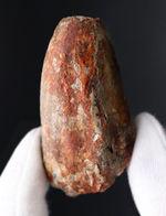 重い、太い!北アフリカの王者、特徴的なフォルムをしたスピノサウルス(Spinosaurus)のものと思しき歯化石
