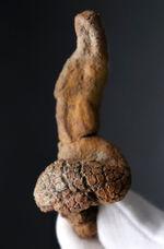 ディティールがよく保存された、米国オレゴン州産の糞化石、コプロライト(Coprolite)
