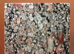 棘皮動物、ウミユリ(Crinoid)の茎部プレート化石