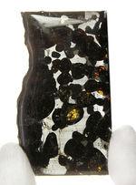 世界で最も美しい隕石とされる石鉄隕石、パラサイト(本体防錆処理済み)。2016年に新たに発見されたケニア共和国セリコ産。