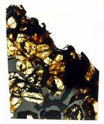 近年注目度が高まっている、ロシア産の石鉄隕石パラサイト、セイムチャン。