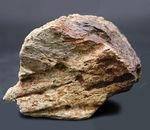 国内の公的博物館の放出品!専門家によるブリーフィングで、ティラノサウルス・レックスによる噛み跡と推察された穴が保存されたトリケラトプスのフリル(襟飾り)の化石