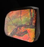 緑と朱に輝く良質のアンモライト(Ammolite)のピースを使ったピンブローチ