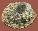 様々なミネラルに置換された、ジュラ紀の恐竜のウンチ化石、コプロライトの磨き標本。