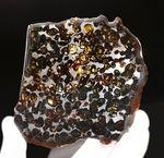 10センチ近い大判、黄金色を呈する美しきかんらん石を御覧ください!2016年にケニアで発見された新しいパラサイト隕石(本体防錆処理済み)