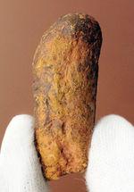 米国ニューメキシコ州の三畳紀の地層から発見された小型肉食恐竜のコプロライト(Coplorite)。糞化石。