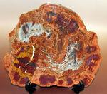 オレンジやイエローと申し上げても過言ではない箇所もあり、地味なものが多い珪化木とは思えないほど、鮮やかなアリゾナ珪化木標本